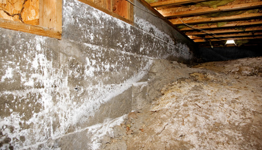 Crawlspace systems, pest control, rodent removal in South Carolina