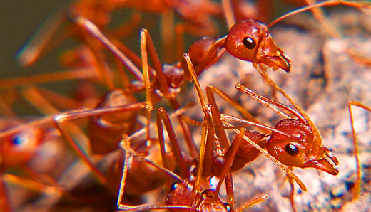 Fire ant removal and other pest control services in SC