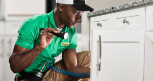 We get rid of bugs, pests, insects in your home